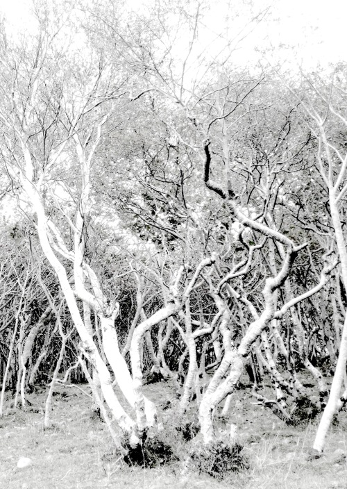 woods at Tokavaig