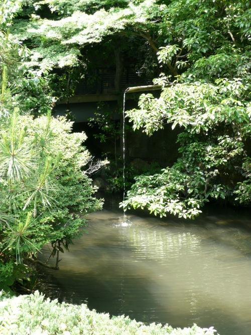 shady pool1